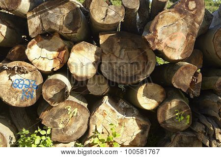 Pile Of Tree Trunks
