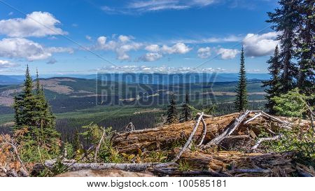 Hiking through alpine meadows and fallen trees