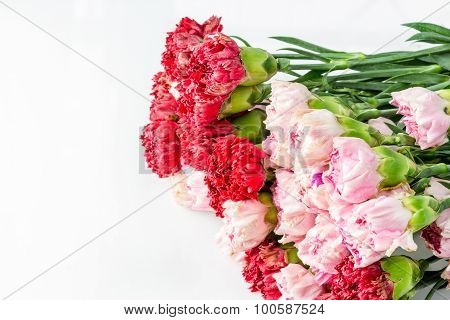 Red And Pink Carnation Flowers