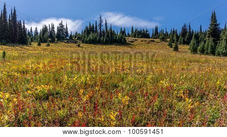 Hiking through the alpine meadows