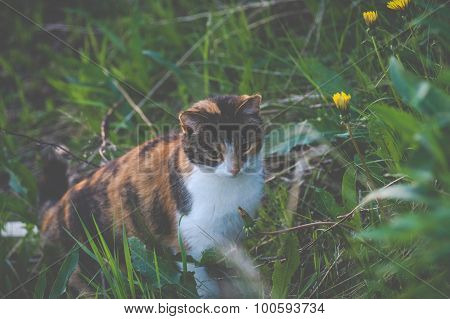 Cat Hunting In Grass, Vintage Matt Toning
