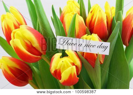 Have a nice day card with colorful tulips