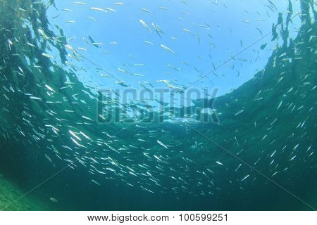 Underwater blue water background and fish