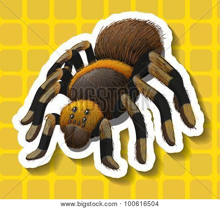 Poisionous spider on yellow background