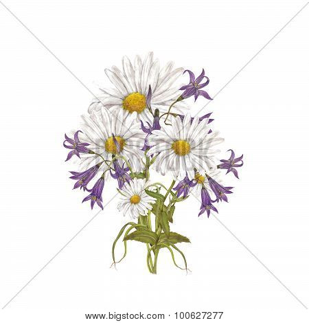 Chamomile with bluebells
