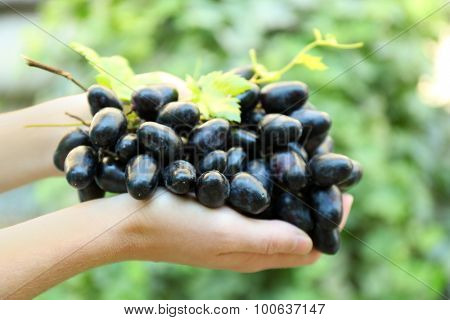 Hands with grapes on nature background