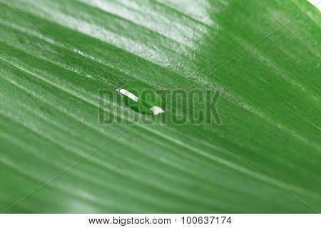 Green leaf with droplet, closeup