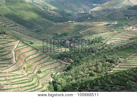 The terraced vineyards of the Douro Valley