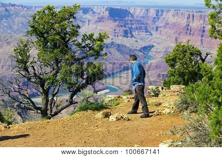 Caucasian Man In Mid Forties Cautiously Looking Over Cliff At Grand Canyon