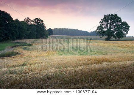 landscape with oaks 2