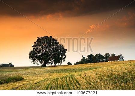 landscape with oaks 5