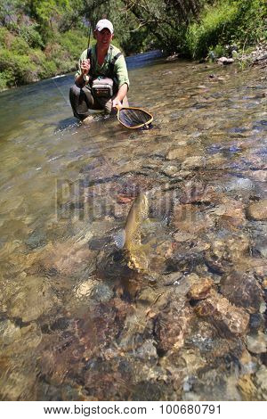 Fly-fisherman in water catching brown trout