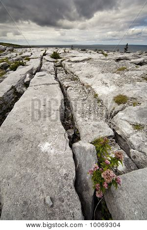 The Irish Burren
