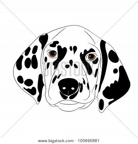 Spotty Dog With Trailing Ears.