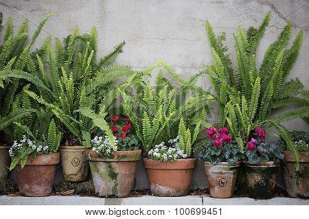 Terra Cotta Plant Pots