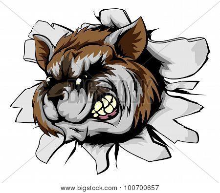 Raccoon Sports Mascot Breakthrough