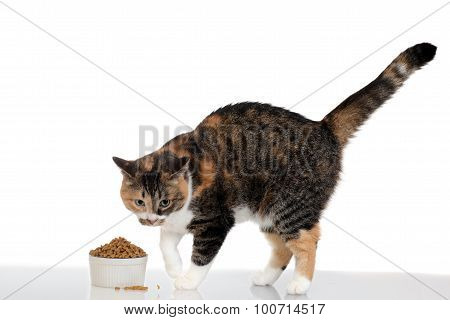 cat with food in bowl