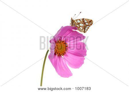 auf einer Blume Schmetterling