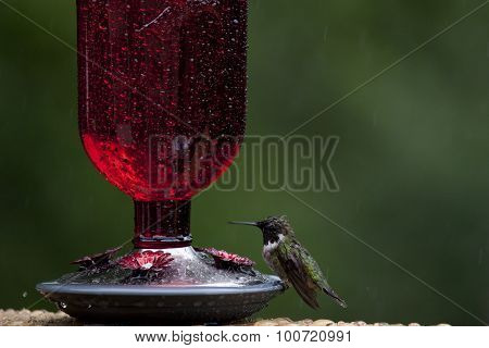 Wet Hummingbird