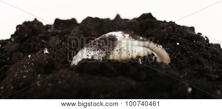Germinating seed in soil isolated on white