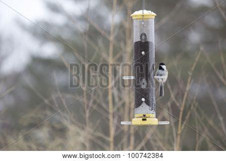 Chickadee On Bird Feeder