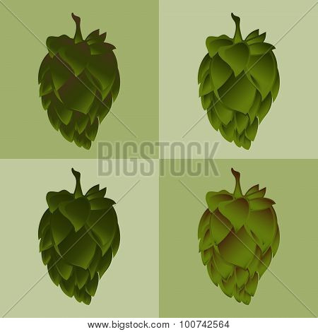 Green Hop Flower Illustration