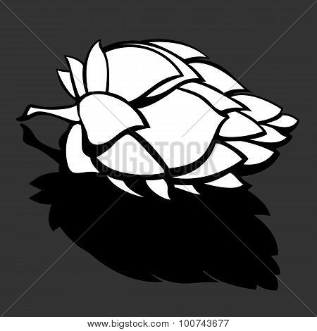 Hop Flower Black and White Illustration