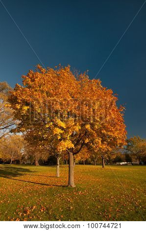 Landscape with autumnal tree and fallen leaves on the grass against blue sky