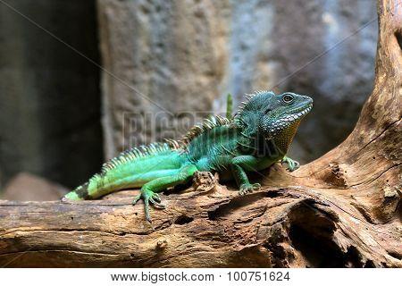Chameleon On Log