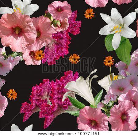Amaranth  Pink Flowers On Black Background