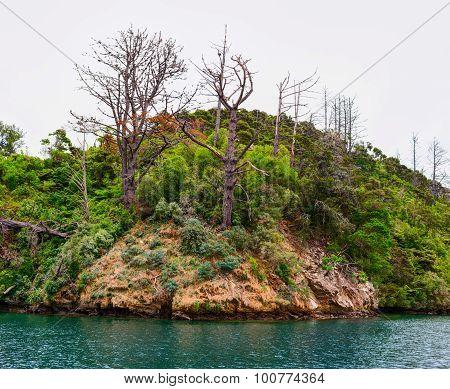 Uninhabitable island in Queen Charlotte Sound bay. New Zealand