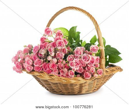 Big Roses Bouquet. branch of pink roses. Isolated