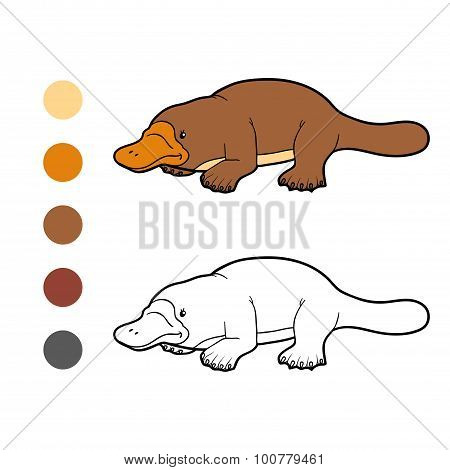 Coloring Book For Children: Platypus