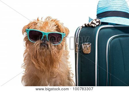 Dog Ready For Vacation