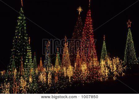 Life U. Christmas Lights