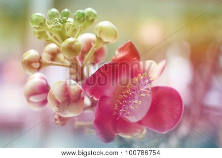 Sal of India flower background lighting