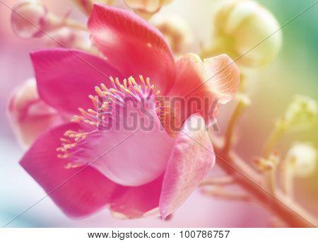 Sal Of India Flower Background Lighting