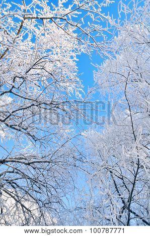 Winter Skyscape