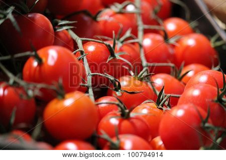 tomatoes grow on the vine