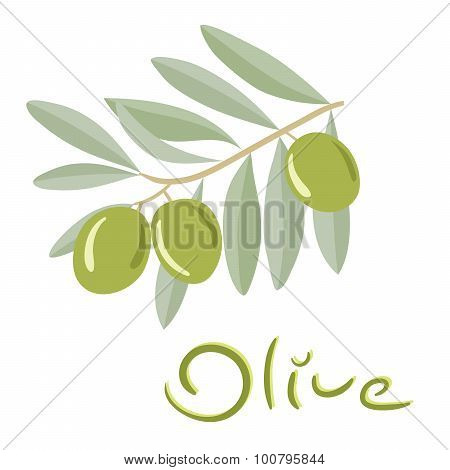 Green olives on a branch with leaves