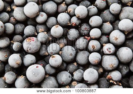 frozen berries of black currant