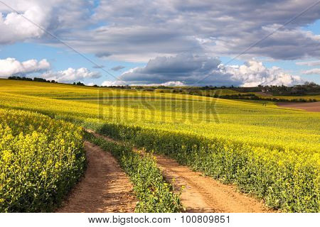 Yellow canola fields and ground road overlooking a valley, rural spring landscape