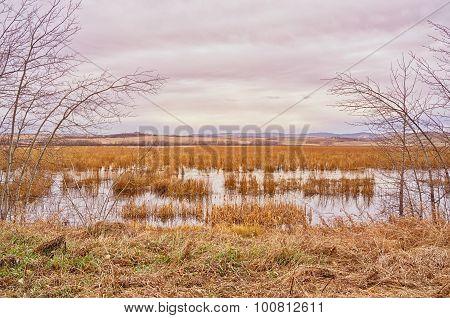 Marshy Autumn Landscape