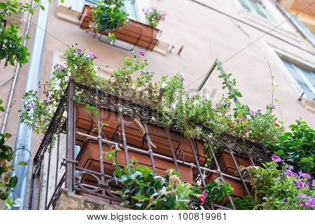 Window sill with flowers, bottom view