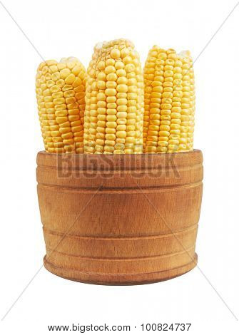 Corn on the cob in bowl, isolated on white background