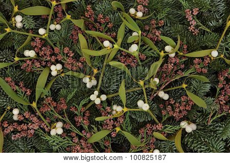 Mistletoe, blue spruce fir and cedar cypress leaf sprigs forming a background.