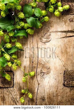 Hop twigs over wooden cracked table background. Vintage toned. Beer ingredients. Beautiful fresh-picked whole hops with green leaves border design close-up. Brewing concept surface. Vertical image