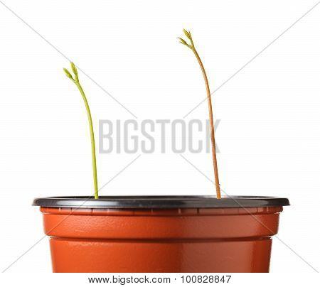 Seedlings Strive For Light