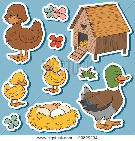 Color Set Of Cute Farm Animals And Objects, Vector Family Duck And Objects