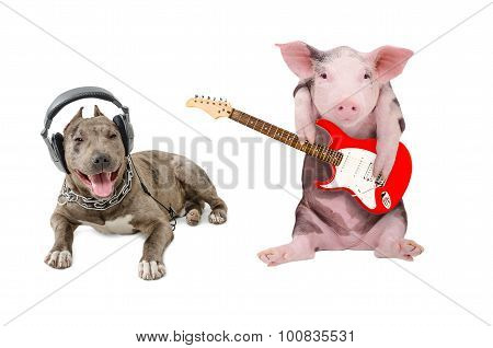 Pit bull in the headphones and a pig plays guitar